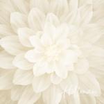 tn_P4389-22-Ivory